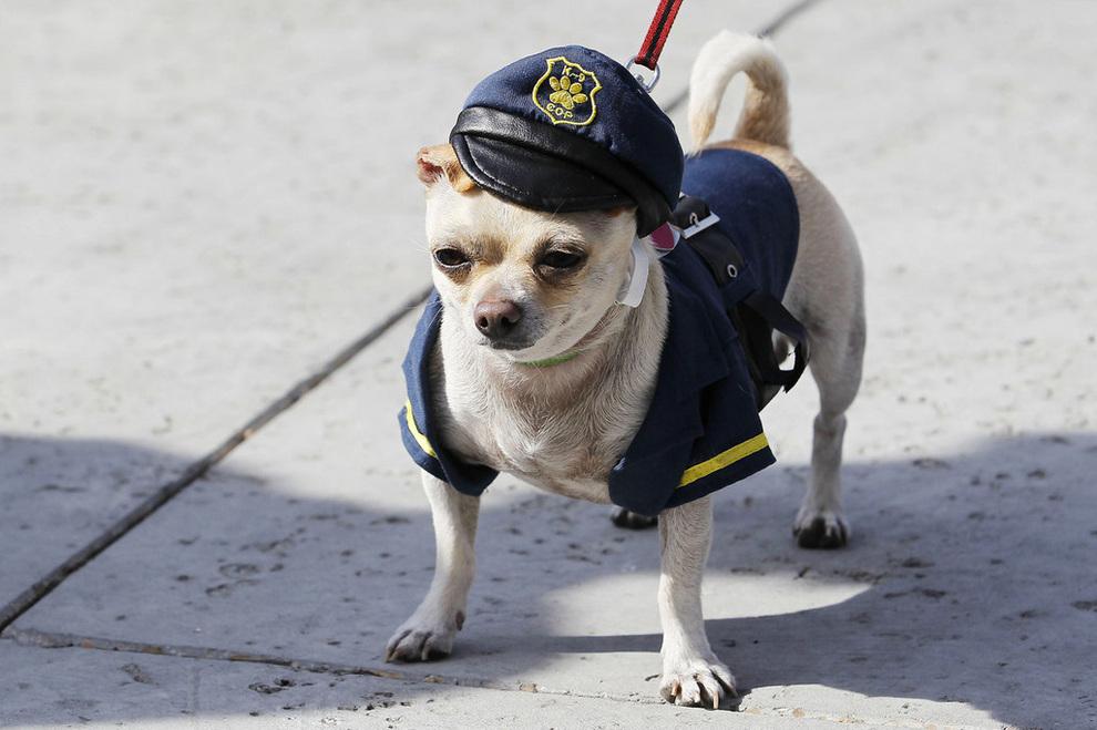 Красочное шествие собак в Новом Орлеане (15 фото)