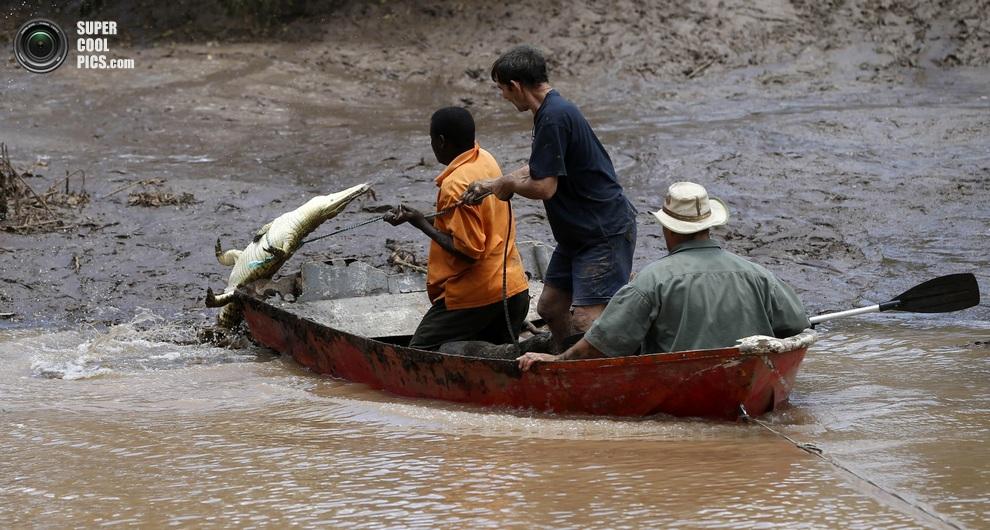 Нашествие крокодилов в реке Лимпопо Supercoolpics_04_30012013190002