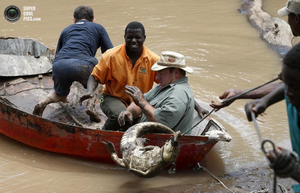 Нашествие крокодилов в реке Лимпопо Supercoolpics_05_30012013185952