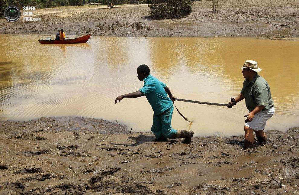 Нашествие крокодилов в реке Лимпопо Supercoolpics_06_30012013190048