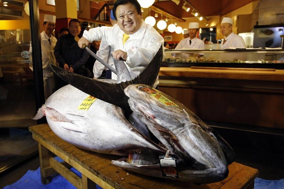 В Японии продан самый дорогой тунец в мире (15 фото)
