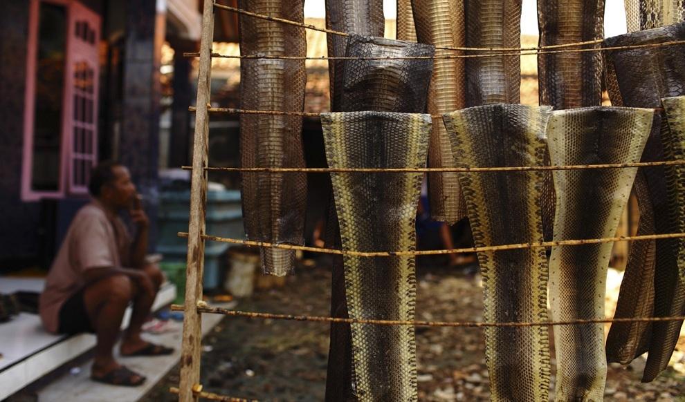 Производство сумок из змеиной кожи (20 фото)