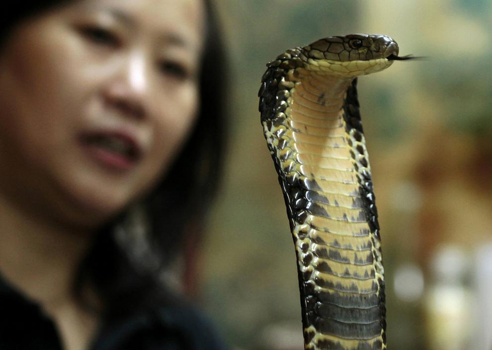 Как готовят змеиный суп в Гонконге (6 фото)