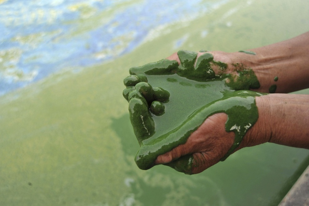 Загрязнение воды в Китае (25 фото)