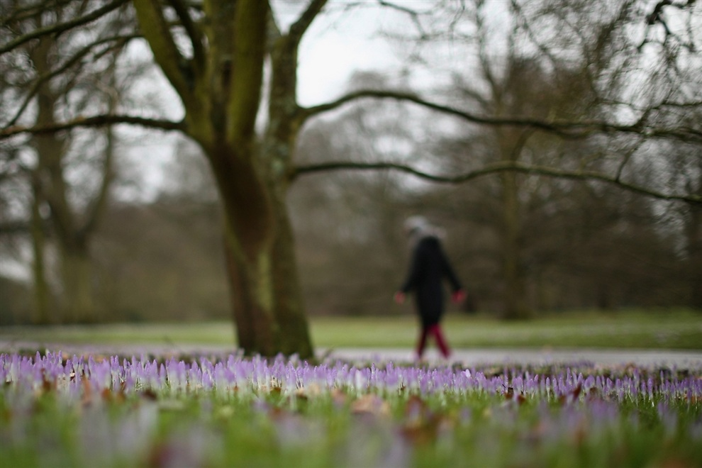 Знаки весны на радость британцам (5 фото)