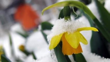Снежная весна Европы (15 фото)