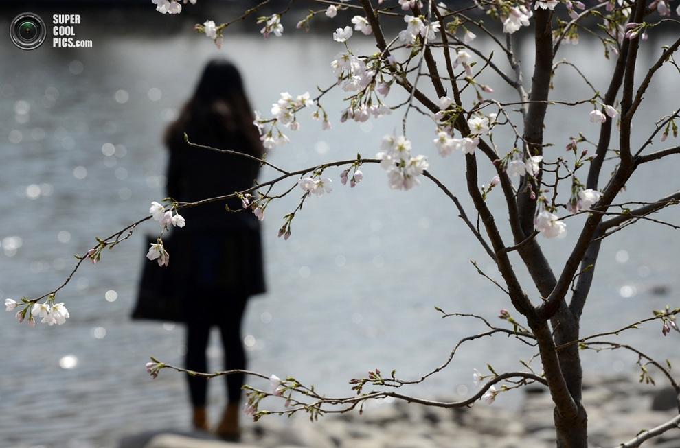 Женщина любуется местным водоёмом. (Xinhua/Li Jundong)