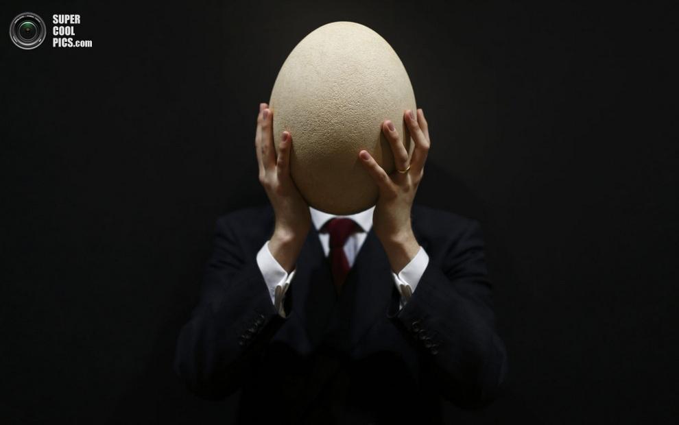 Яйцо слоновой птицы, полностью закрывающее голову научного консультанта Christie's, Лондон, Англия, 27 марта 2013 года. (JUSTIN TALLIS/AFP/Getty Images)