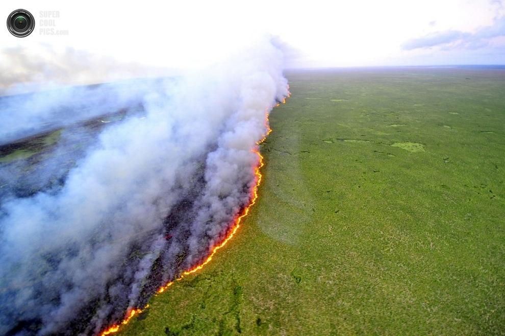 Линия огня на территории экологической станции Таим, штат Риу-Гранди-ду-Сул, Бразилия, 27 марта 2013 года. (LAURO ALVES/AFP/Getty Images, Agencia RBS)