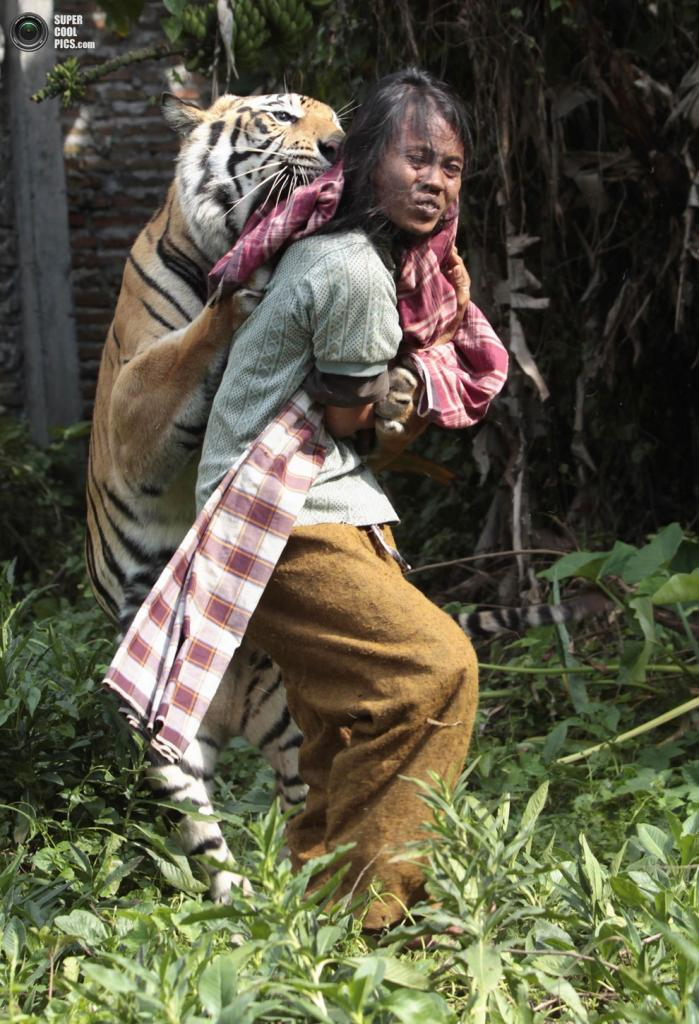 Тигриные ласки. (REUTERS/Sigit Pamungkas)