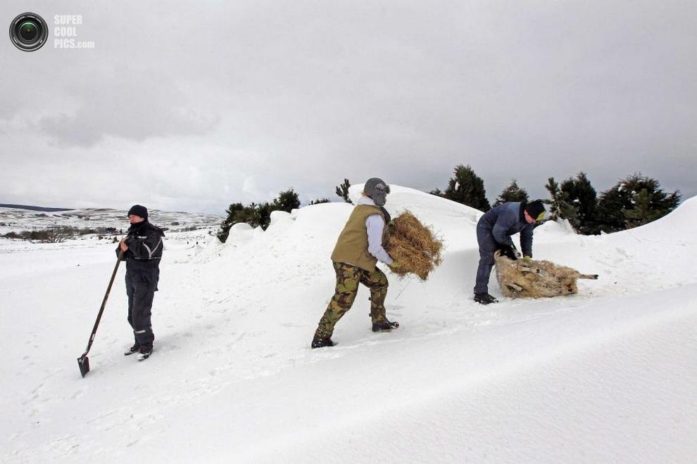 Кит Маккуиллан (Keith McQuillan) и Рут Киз (Ruth Keyes) помогают О'Рейлли спасти овечек от переохлаждения. (REUTERS/Cathal Mcnaughton)
