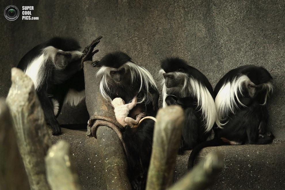 Стая с интересом «обсуждает» малютку. (Scott Olson/Getty Images)