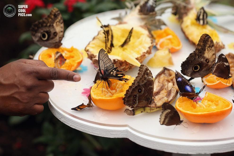 Бабочки в лондоне 8 фото
