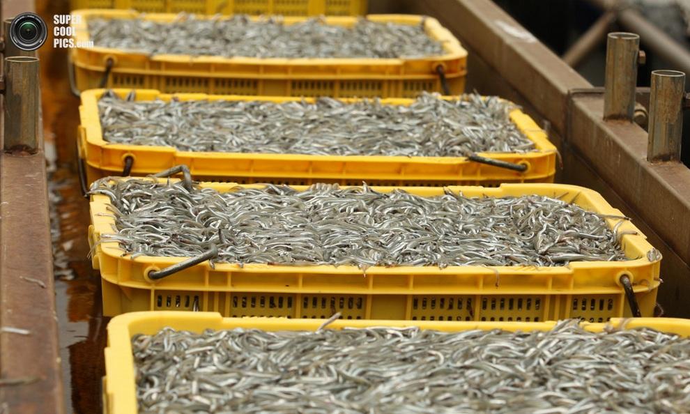 Контейнеры с песчанками в приближении. (Buddhika Weerasinghe/Getty Images)