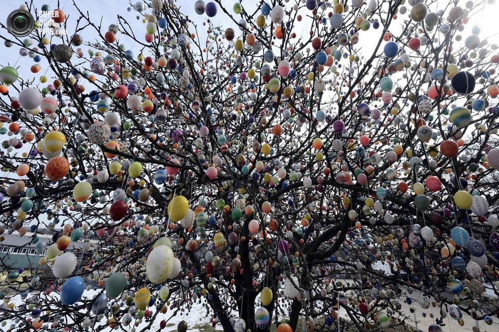 «Пасхальное дерево» Крафтов во всей красе. (Thomas Lohnes/Getty Images)