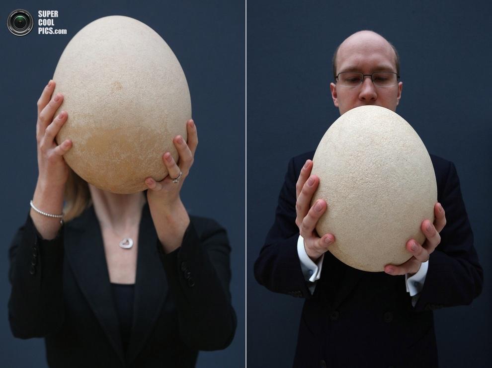 Коллаж снимков, где сотрудники Christie's позируют с яйцом в анфас. (Oli Scarff/Getty Images)