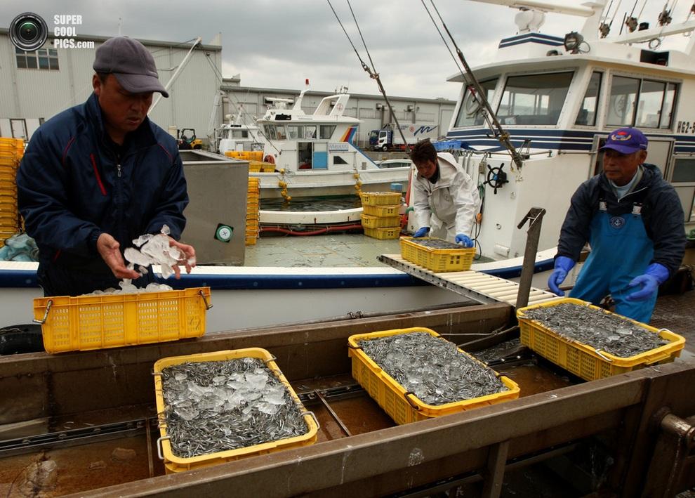 Покрытие льдом, чтобы рыба не загнивала. (Buddhika Weerasinghe/Getty Images)