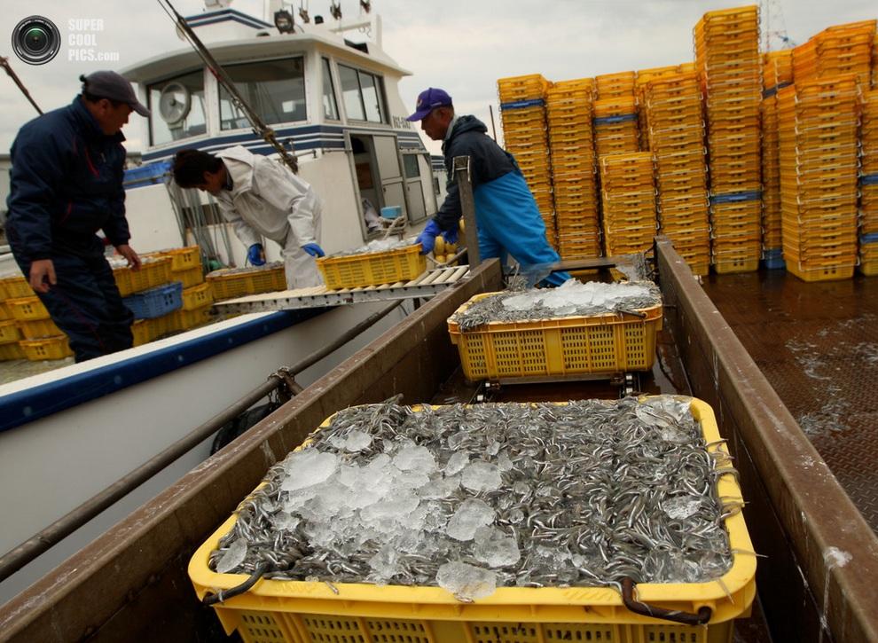 Льда не нужно очень много — большинство контейнеров тут же отправляются на рынки и заводы. (Buddhika Weerasinghe/Getty Images)