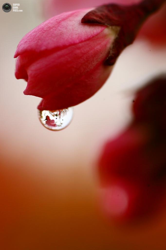 Сколько красоты может таить в себе самая обыкновенная капелька! (Xinhua/Cui Genyuan)