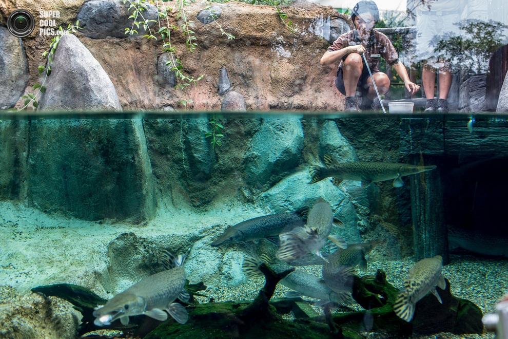 Сотрудники зоопарка раздают пайки рыбам Миссисипи. (Chris McGrath/Getty Images)