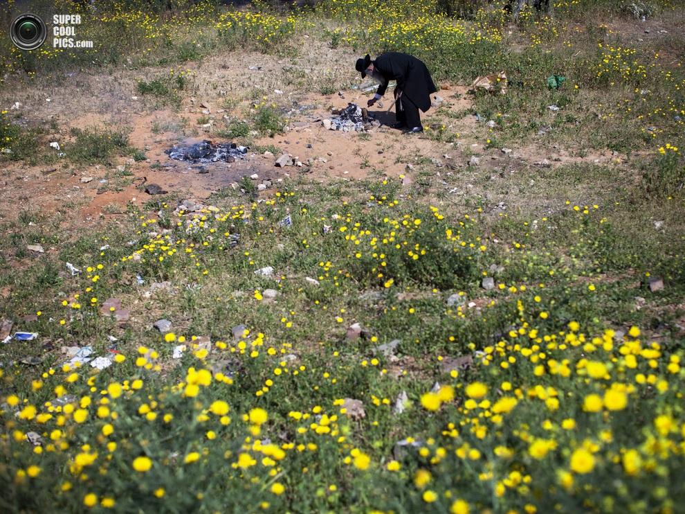 Мужчина тушит остатки костров среди зарослей жёлтоцветной пупавки. (AP Photo/Oded Balilty)