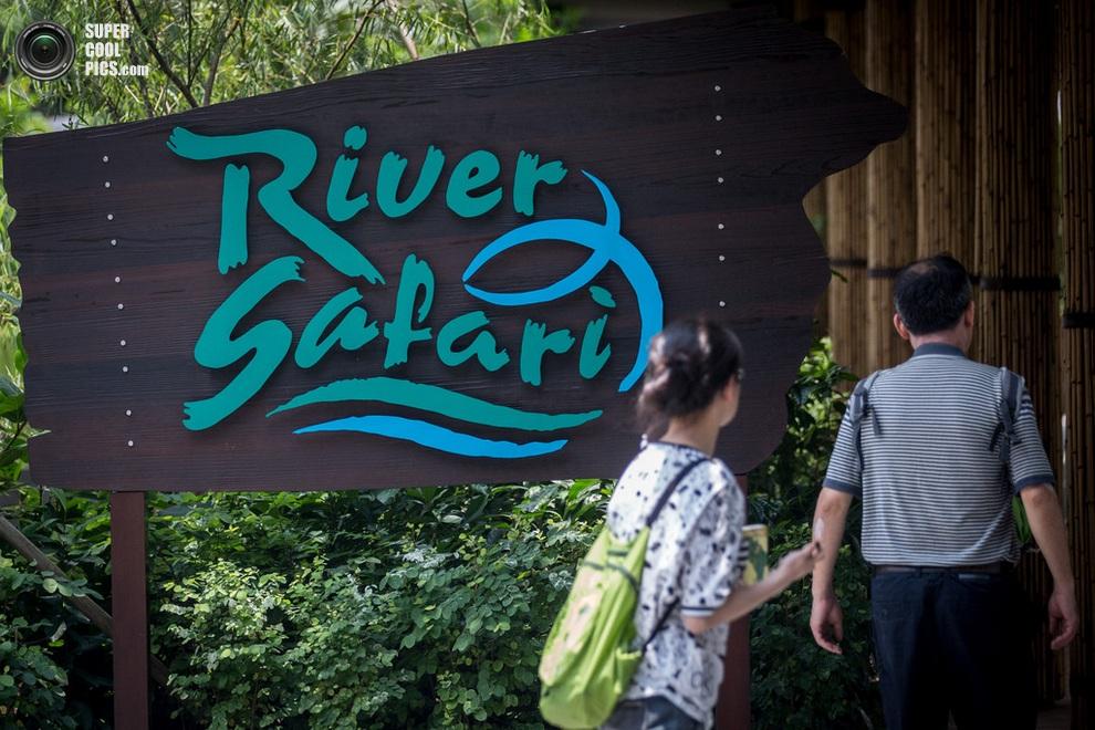 Стенд с логотипом зоопарка на входе. (Chris McGrath/Getty Images)