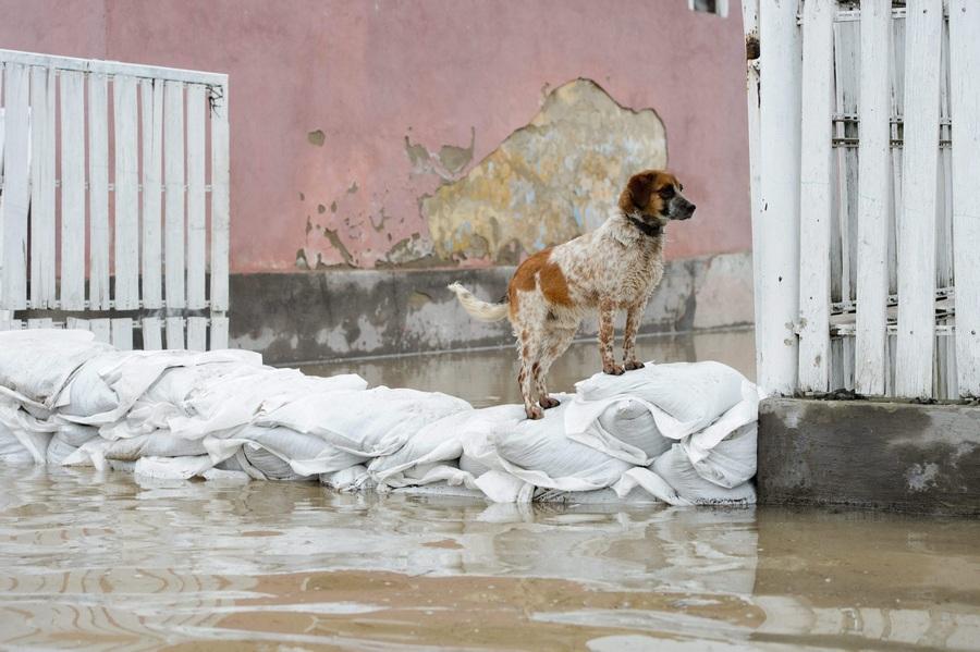 Венгрия. Ипойтарноц, Ноград. 1 апреля. Наводнение, вызванное таянием снегов, обильными дождями и вышедшей из берегов рекой Ипель. (EPA/ИТАР-ТАСС/PETER KOMKA)