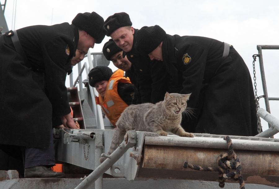 Боевые корабли РФ вернулись в Севастополь после учений на юге России (9 фото)