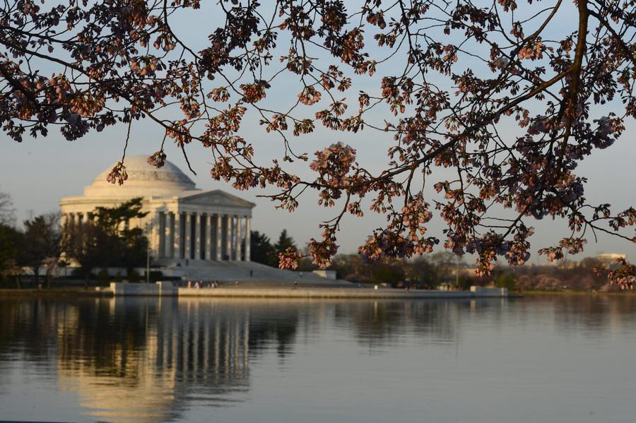 Фестиваль цветения сакуры в Вашингтоне (12 фото)