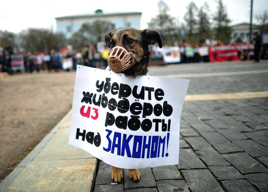Акция в защиту животных «Россия без жестокости!» (10 фото)