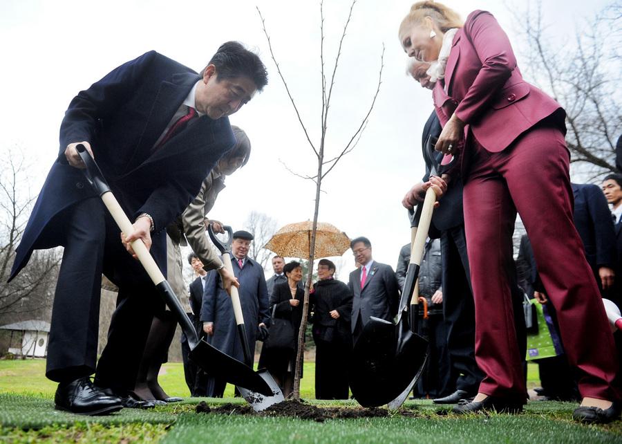 Синдзо Абэ посадил сакуру в ботсаде им. Н.В. Цицина (5 фото)