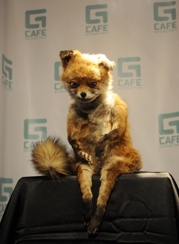 Адель Морзе представила «Упоротого лиса» в Санкт-Петербурге (4 фото)