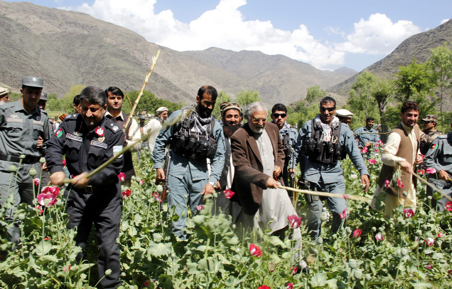 Уничтожение полей опийного мака в Афганистане