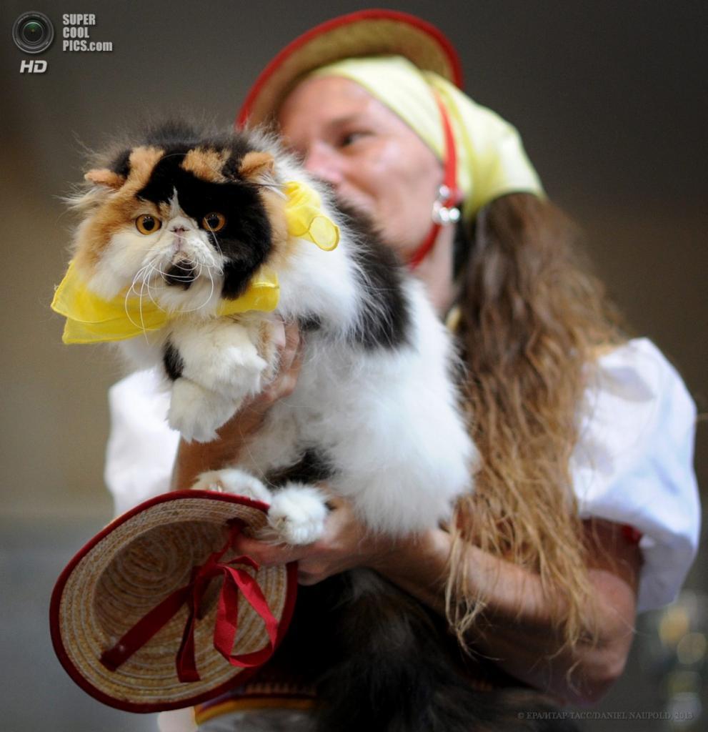 Германия. Дортмунд, Северный Рейн — Вестфалия. 20 апреля. На выставке кошек. (EPA/ИТАР-ТАСС/DANIEL NAUPOLD)