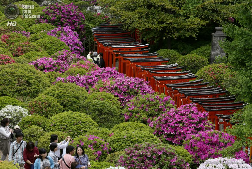 Япония. Токио. 29 апреля. Цветение азалий. (EPA/ИТАР-ТАСС/KIMIMASA MAYAMA)