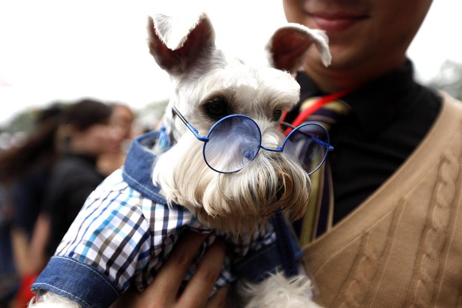 Выставка собак в Ханое