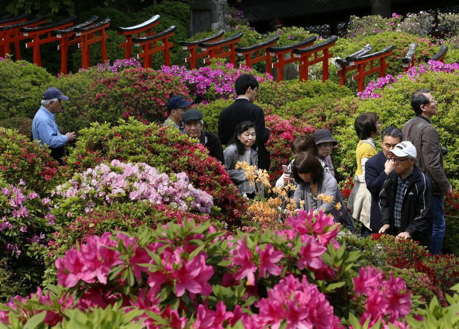 Цветение азалий в Токио
