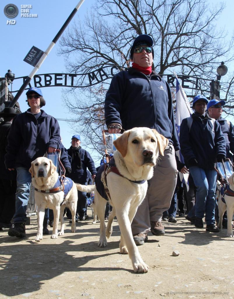 Польша. Освенцим, Малопольское воеводство. 8 апреля. Слепые участники традиционного «Марша жизни» с собаками-поводырями. (EPA/ИТАР-ТАСС/JACEK BEDNARCZYK)