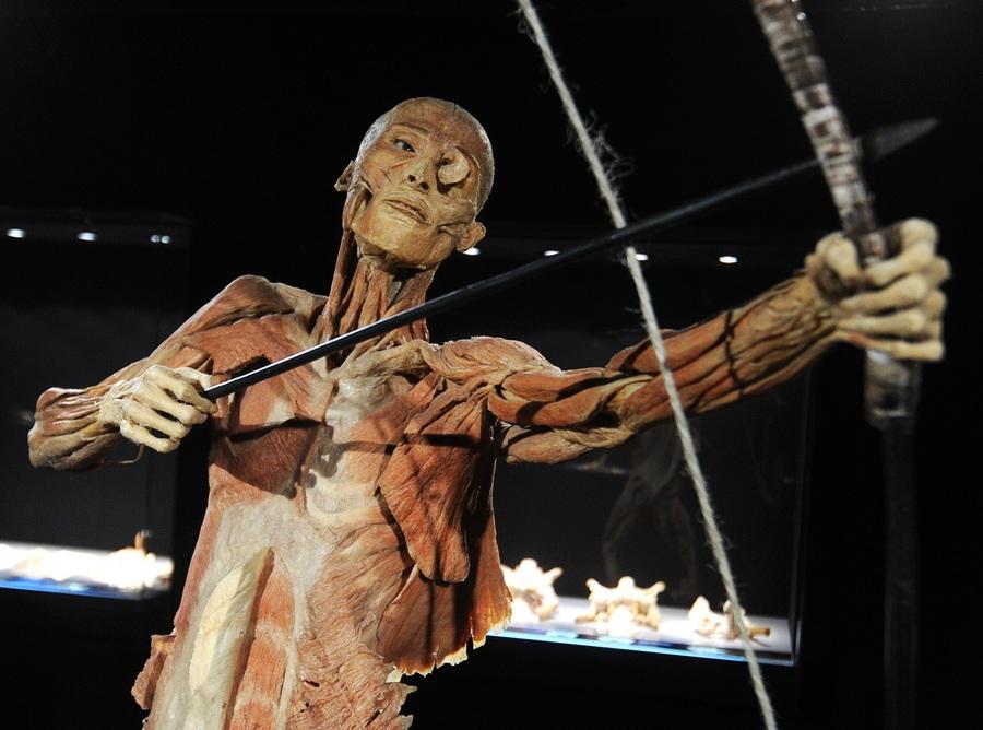"""Пресс-показ анатомической выставки """"Тайны тела. Вселенная внутри"""" в арт-центре """"Ветошный"""""""