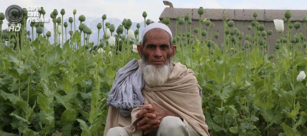 Афганистан. Кхогьяни, Нангархар. 26 апреля. Афганский крестьянин на фоне макового поля. (EPA/ИТАР-ТАСС/S. SABAWOON)