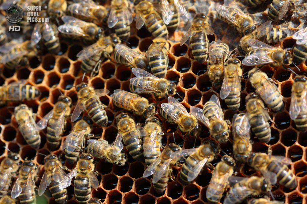 Польша. Янкув-Пшигодзький, Великопольское воеводство. 25 апреля. Производство мёда в Польше. (EPA/ИТАР-ТАСС/TOMASZ WOJTASIK)