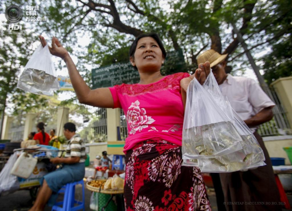Мьянма. Янгон. 17 апреля. Уличный торговец продает живую рыбу «для освобождения». (EPA/ИТАР-ТАСС/LYNN BO BO)