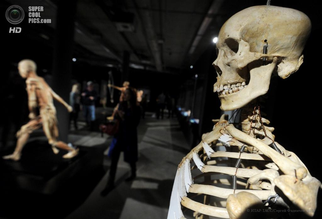 Россия. Москва. На анатомической выставке «Тайны тела. Вселенная внутри» в арт-центре «Ветошный». (ИТАР-ТАСС/Сергей Фадеичев)