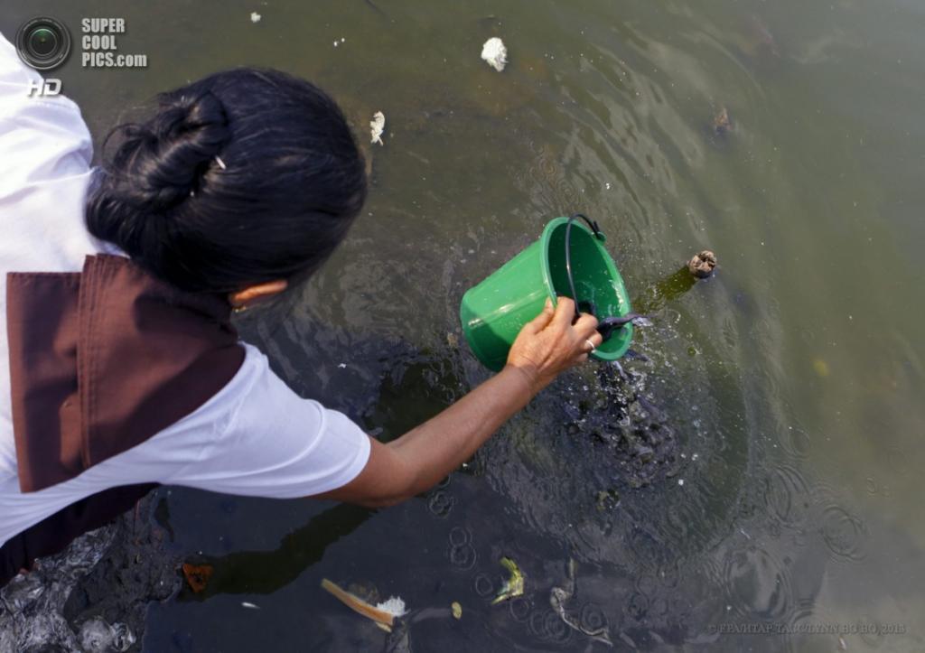 Мьянма. Янгон. 17 апреля. Освобождение рыбы, сопровождаемое традиционными словами: «Я отпускаю вас один раз, чтобы вы десять раз отпустили меня». (EPA/ИТАР-ТАСС/LYNN BO BO)