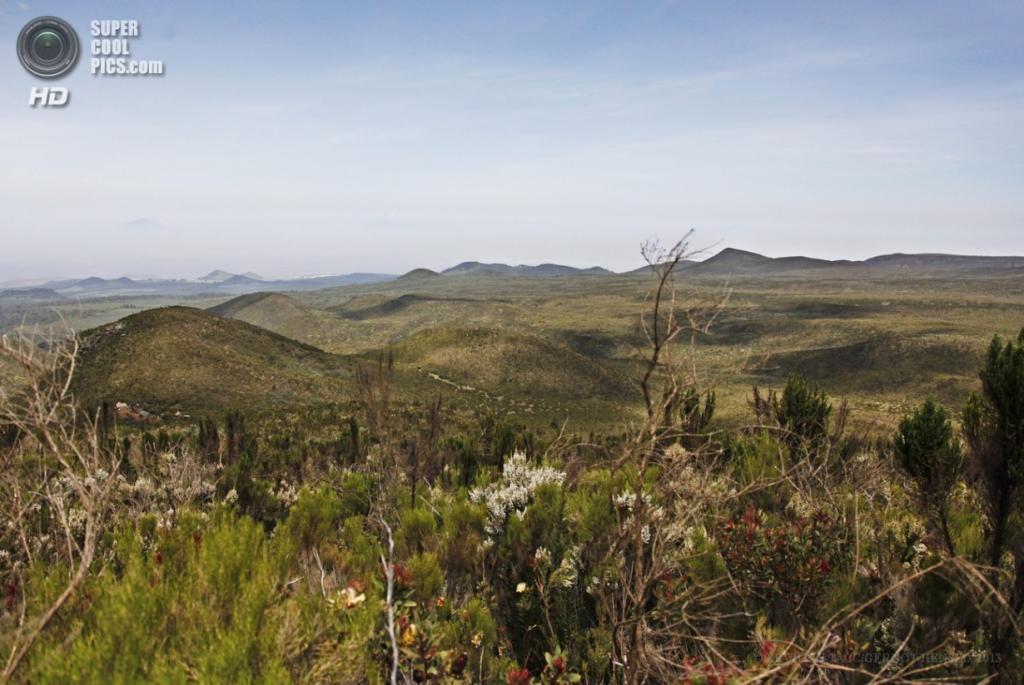 Танзания. Килиманджаро. 9 февраля. Вересковая зона на западном склоне. (EPA/ИТАР-ТАСС/GERNOT HENSEL)