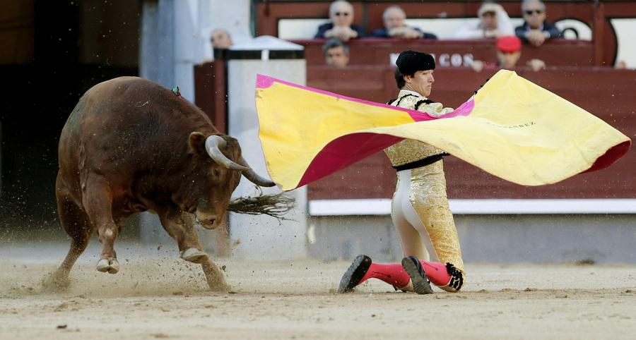 Фестиваль корриды ко Дню Святого Исидора Мадридского (7 фото)