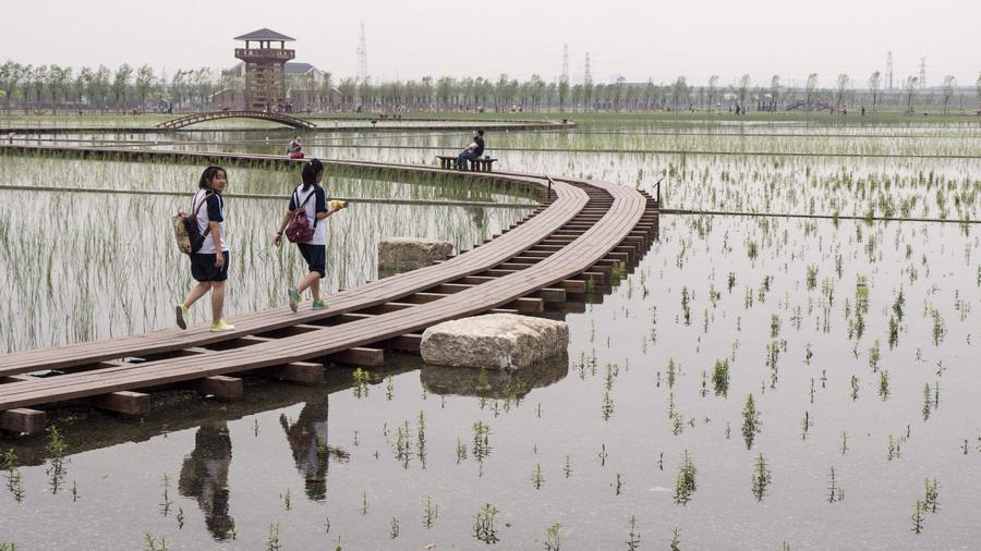 Китай. Пекин. 21 мая. На 9-й Китайской международной садовой выставке. (EPA/ИТАР-ТАСС/ADRIAN BRADSHAW)