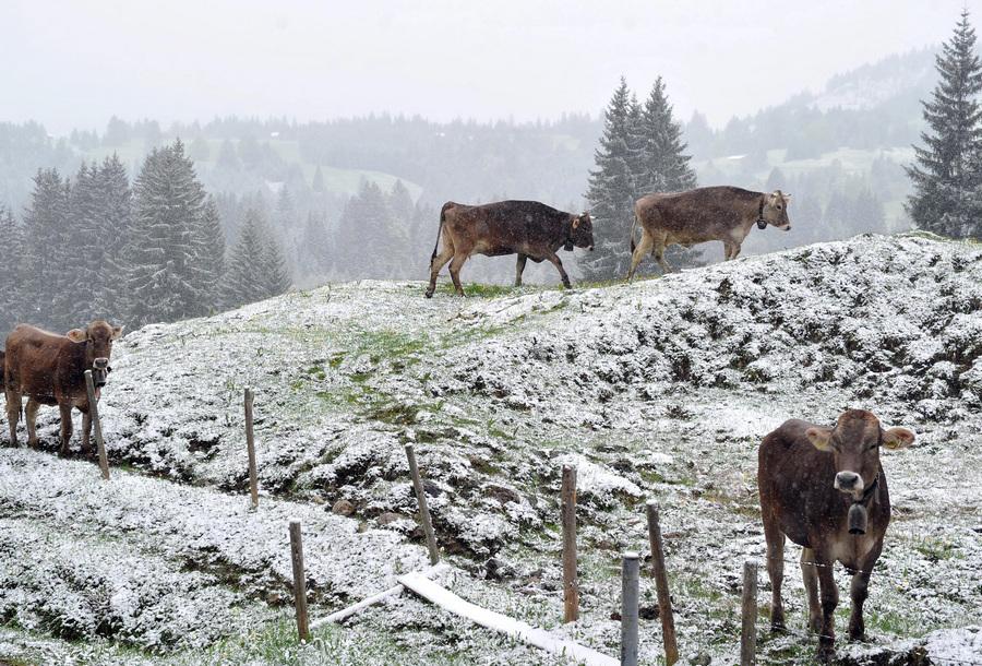 Снегопады в Европе за неделю до лета (7 фото)