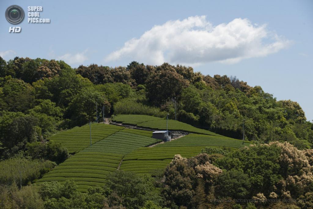 Япония. Фудзиэда, Сидзуока. 3 мая. Чайные плантации. (EPA/ИТАР-ТАСС/EVERETT KENNEDY BROWN)