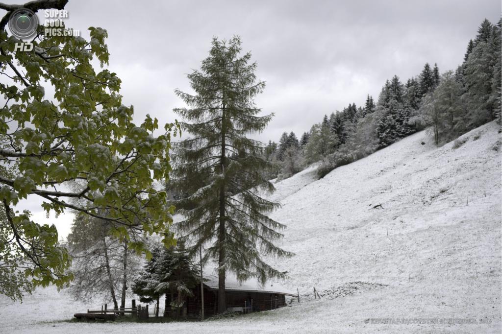 Швейцария. Шпиц, Берн. 24 мая. Снегопады за неделю до календарного лета. (EPA/ИТАР-ТАСС/PETER SCHNEIDER)